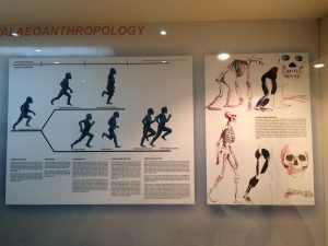 palaeoanthropology: the origin of Indonesians?